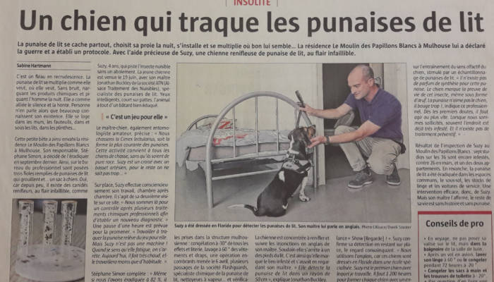 article-alsace-chien