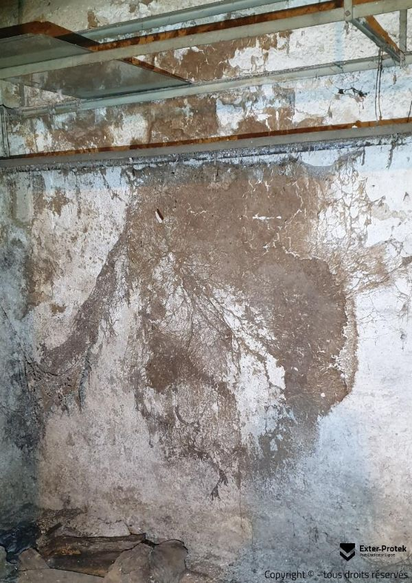 traitement-merule-Le-coniophore-des-caves-exter-protek-68